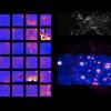 Ultrafioletowa mapa nocnej atmosfery ziemskiej
